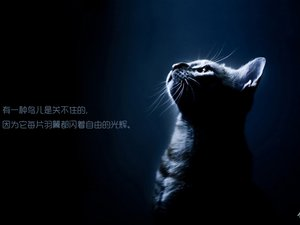 安卓喵星人 萌宠 宠物 猫手机壁纸