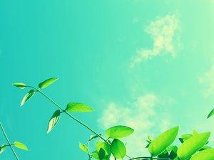 安卓风景 春意盎然手机壁纸