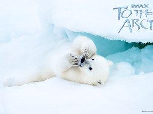 安卓影视 欧美 纪录片 到北极去 北极熊 梅丽尔·斯特里普 文艺言情手机壁纸