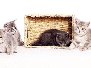 安卓萌宠 喵星人 猫 卖萌 古灵精怪 觉创摄影 宠物手机壁纸