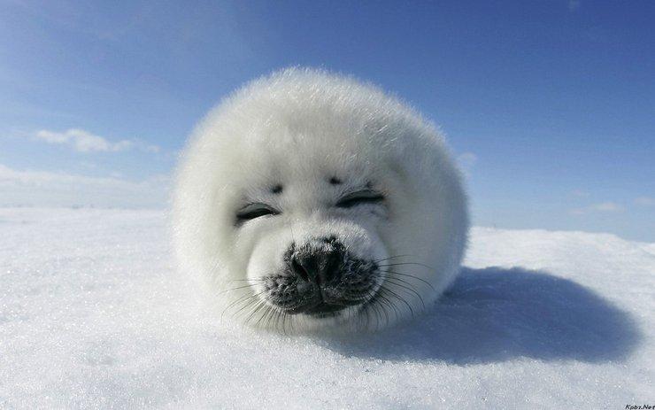 安卓萌宠 动物 可爱 萌物 宠物 北极熊 卖萌图 搞笑图 极地物种 儿童桌面专用手机壁纸