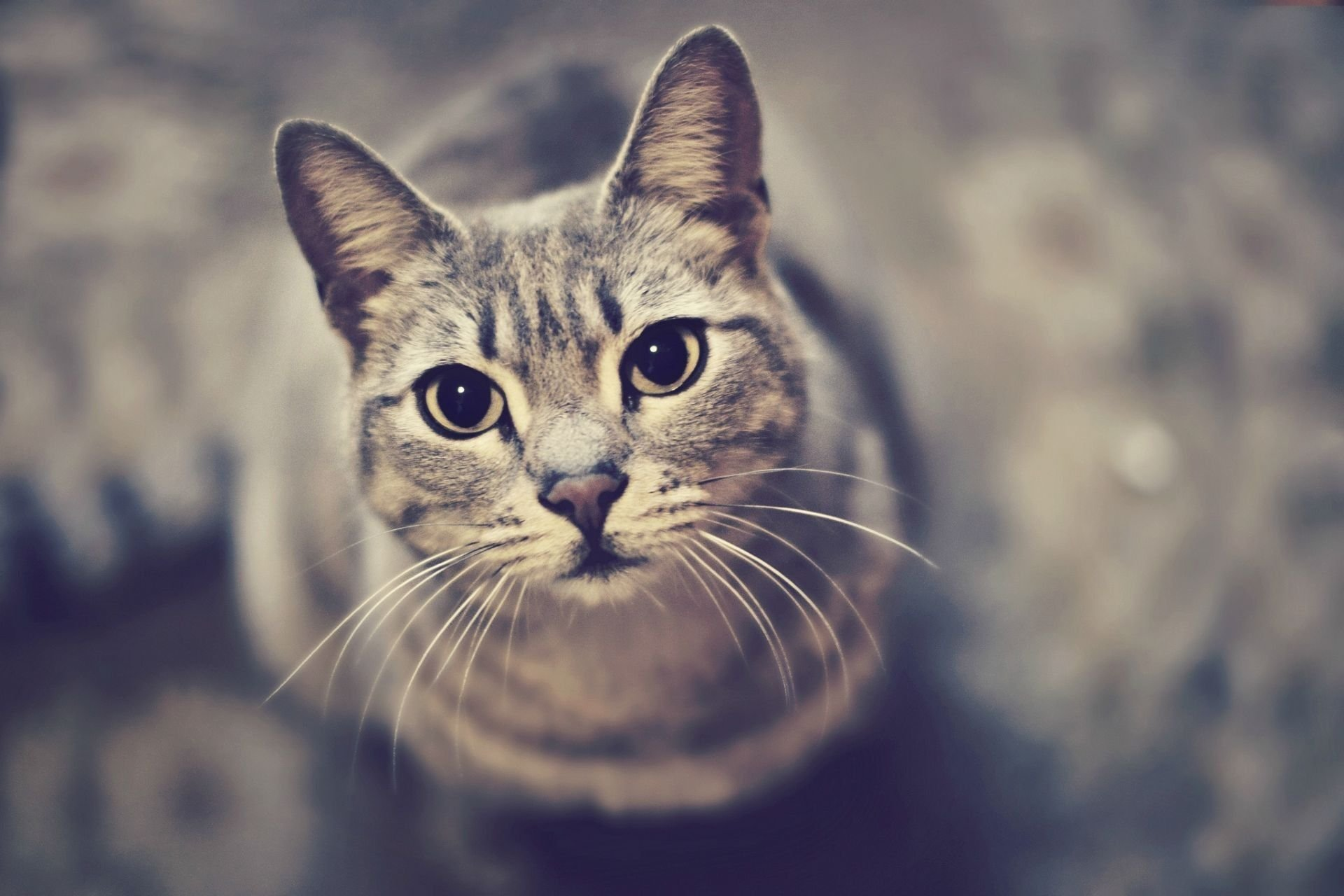 android安卓萌宠 喵星人 可爱 宠物 卖萌 猫高清手机