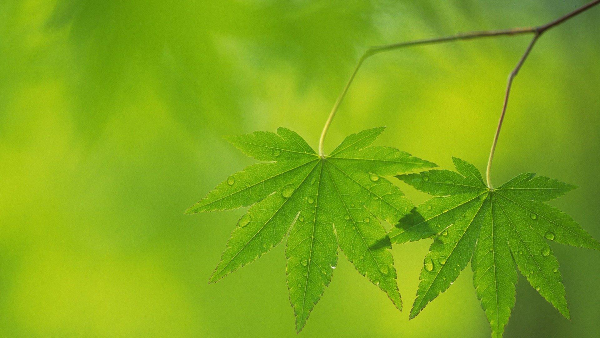 纯绿色的图片手机壁纸_聊天绿色草坪护眼图片_纯深绿色壁纸图片大全