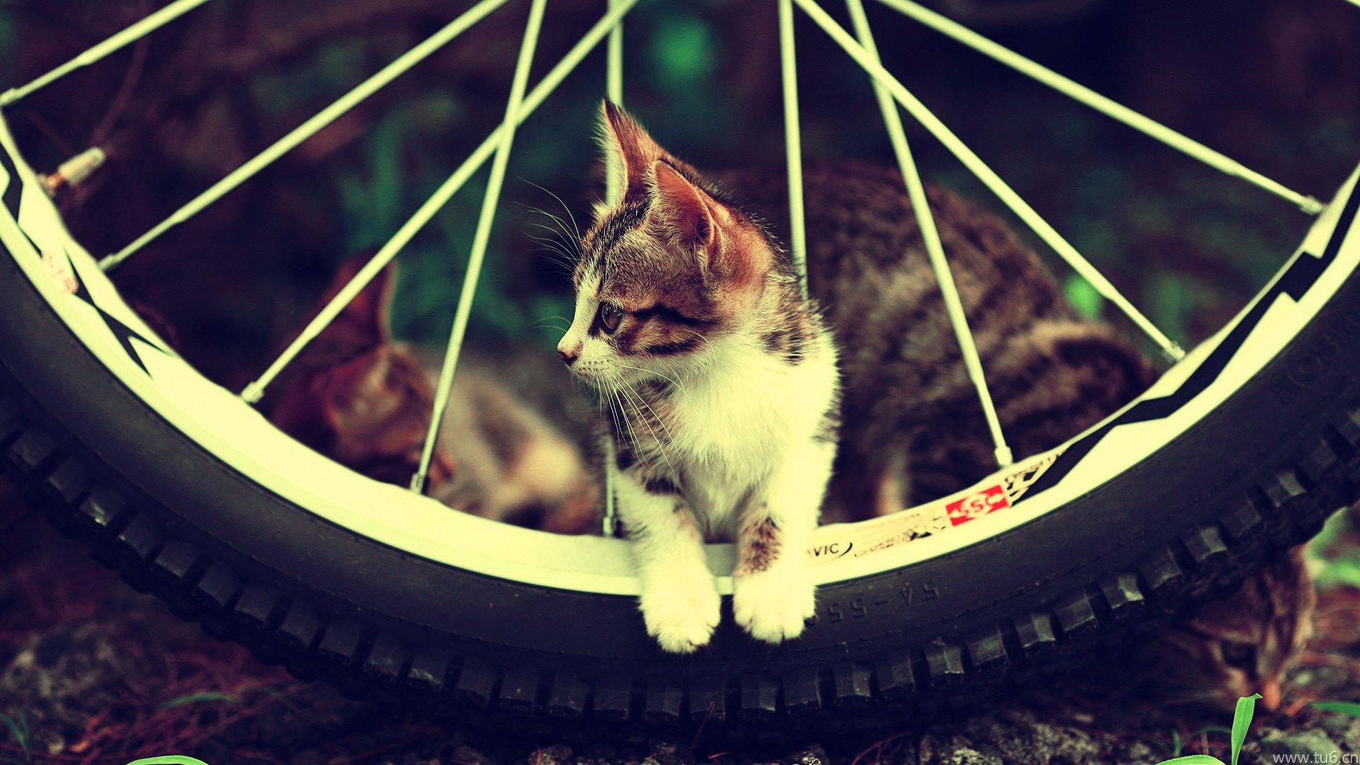>> 文章内容 >> 卖萌可爱的猫咪壁纸  求卖萌的符号表情答:(•&