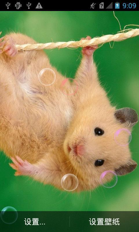可爱小鼠动态壁纸
