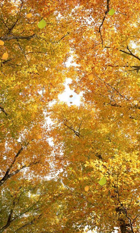 深秋的树林-绿豆动态壁纸