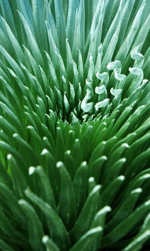 绿色风景高清动态壁纸