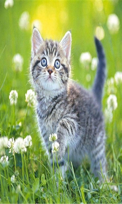 治愈系猫咪-静态壁纸