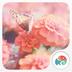 花蝴蝶-梦象动态壁纸