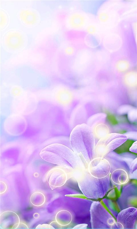 壁纸主题 紫色兰花-动态壁纸下载